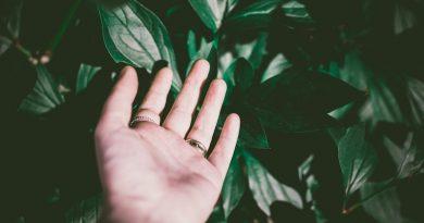 geste ecologique jardin
